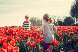 bloembollen kopen
